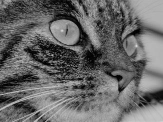 Tierhaar Staubsauger für Fell von Hund und Katze