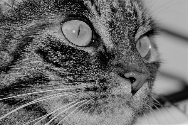 Staubsauger Tierhaare  Darauf achten wenn Hund und Katze  ~ Staubsauger Gegen Tierhaare